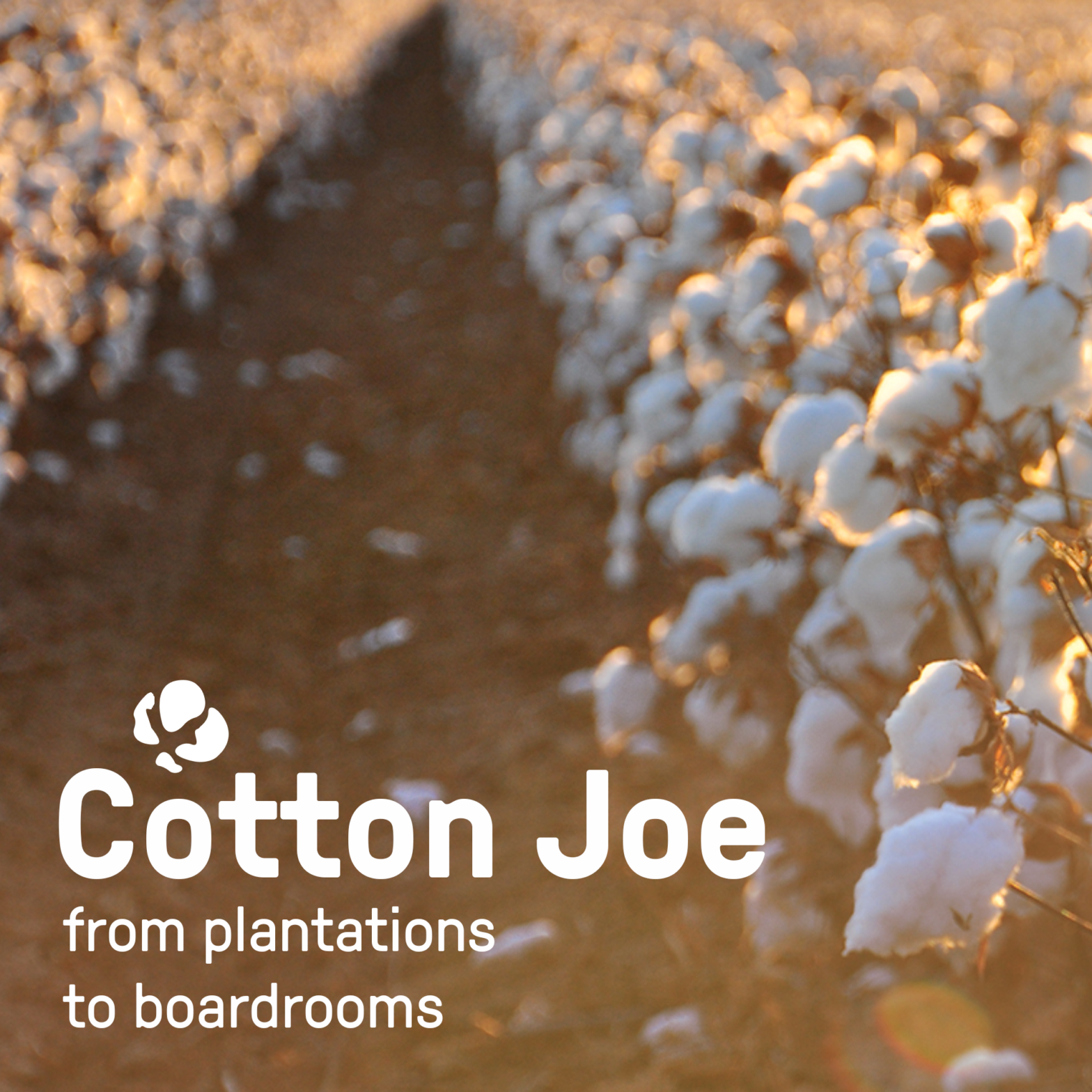 Cotton Joe